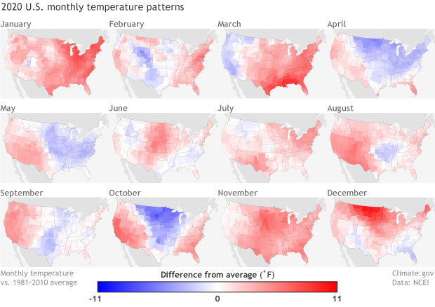 Rows of small monthly maps of U.S. temperature anomalies 2020