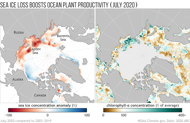 Side by side maps of July 2020 sea ice anomalies and ocean plant productivity