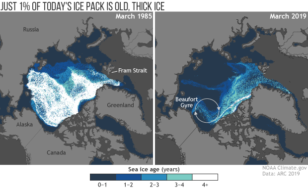 Arctic sea ice age, March 1985 and March 2019