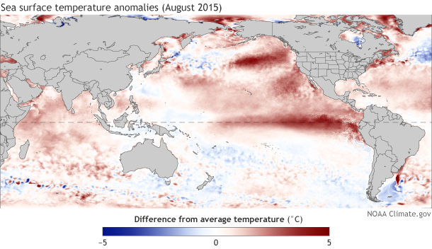Sea surface temperature anomaly August 2015