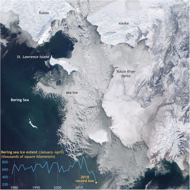 Satellite image of the Bering Sea on January 31, 2018, with a small graph at lower left showing annual ice extent since 1979