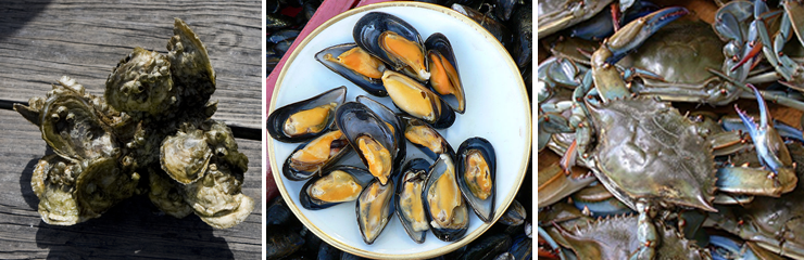 Photo montage of blue crab, shellfish, and mussels