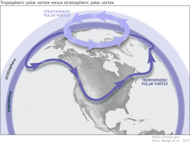 Schematic of the Northern Hemisphere vortexes
