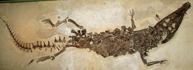 Fossil crocodile from Wyoming