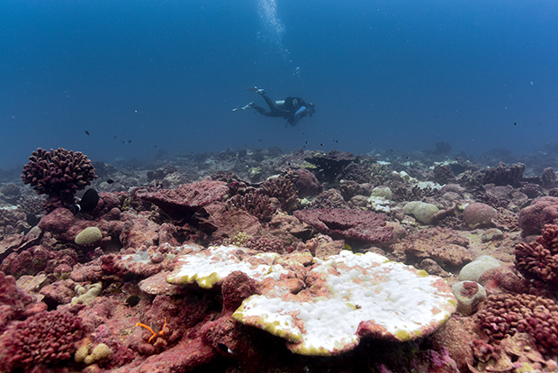 a diver hovers over a reef that is dotted by patches of bone-white (bleached) coral