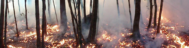 Photo of a controlled burn in the understory of a forest