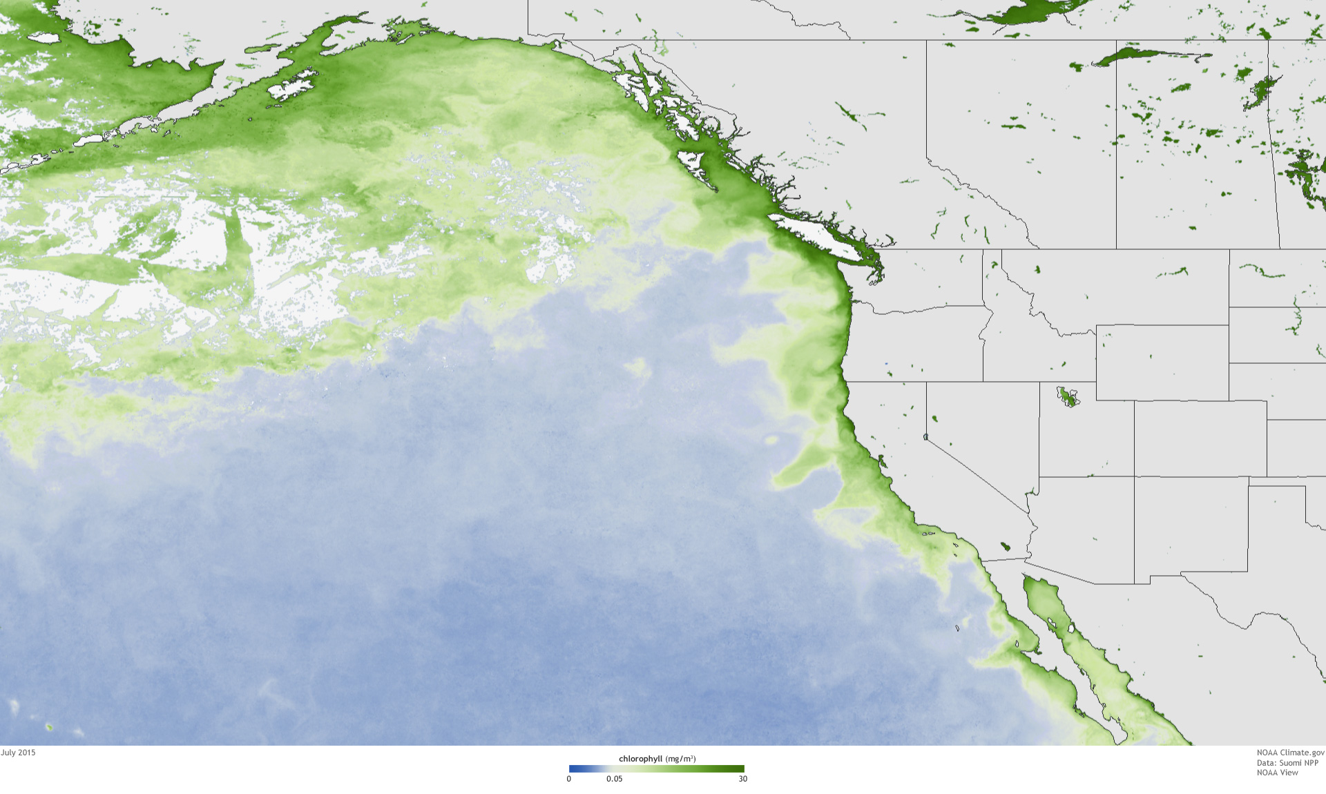 Record setting bloom of toxic algae in north pacific noaa climate noaaviewchlorojuly2015 gumiabroncs Image collections