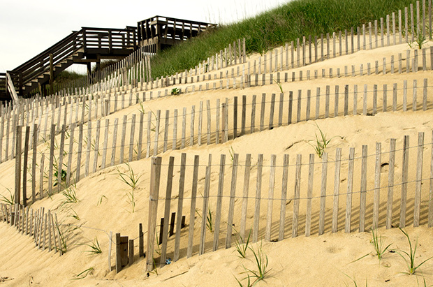 Dunes crossed by sand fences