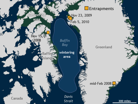 Map of narwhal habitat and entrapment locations near Greenland