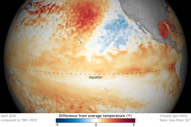 Globe-style map of the tropical Pacific Ocean for April 2020 showing warmer than average surface waters in red and orange and cooler than average waters in blue