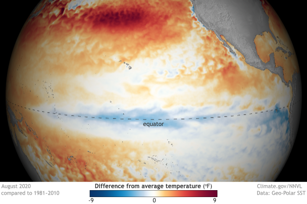 Spherical map of the tropical Pacific showing colder than average sea surface temperatures at the equator in August 2020