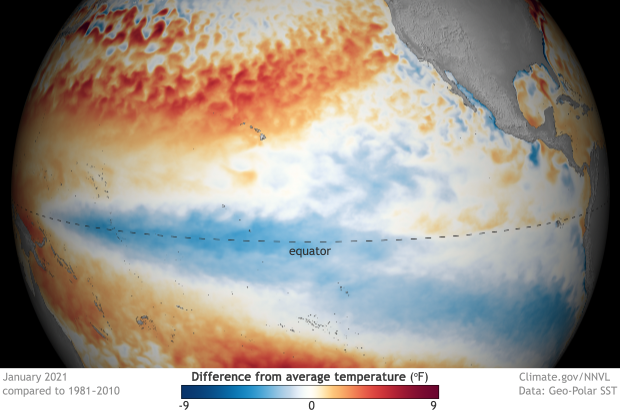 Spherical map of the tropical Pacific Ocean showing surface temperatures in January 2021 compared to average
