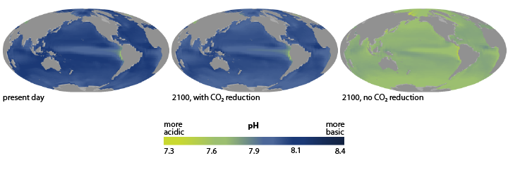 trio of maps showing present ocean pH and two possible futures, based on different carbon emission scenarios