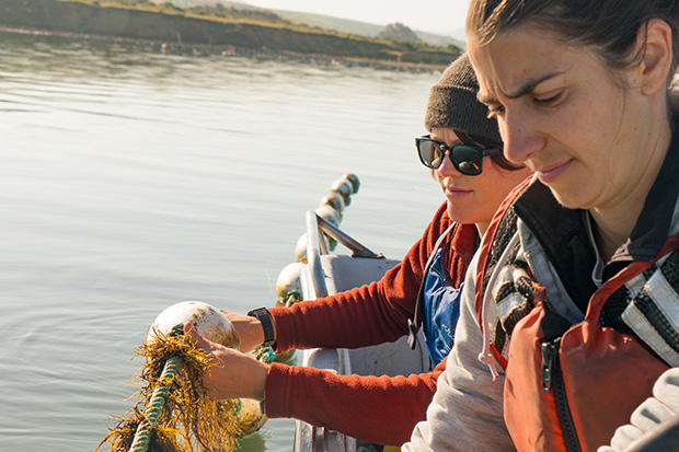 Avery Resor and Catherine O'Hare check their crop of Gracilaria growing on long lines of rope at Hog Island Oyster Farm