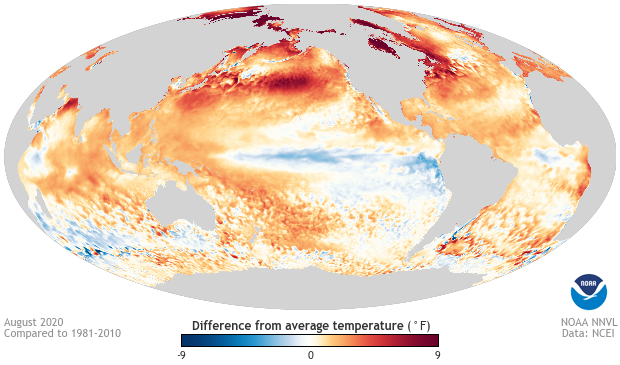 August 2020 sea surface temperature anomaly