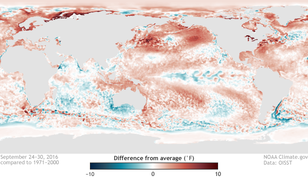 Sea surface temperature anomalies in the Pacific Ocean