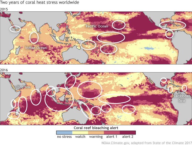 map of tropical oceans showing levels of heat stress to reefs in 2015 (top) and 2016 (bottom) in colors from light blue to dark pink