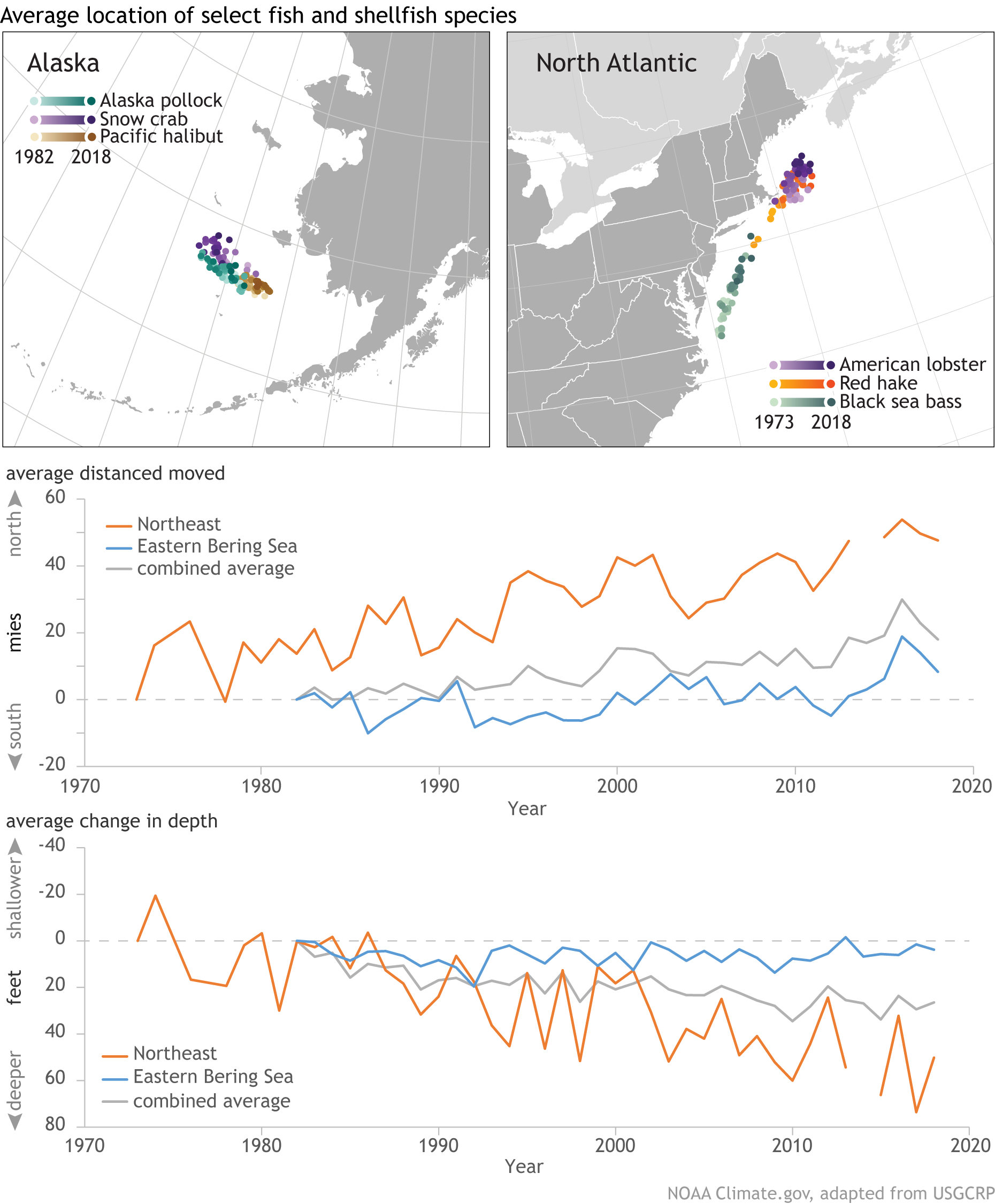 Species movement maps and graphs