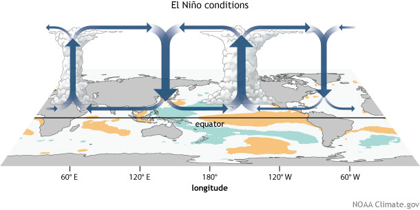 walker circulation, ENSO, El Niño, convection, circulation, walker cell, tropical circulation, Pacific Walker Circulation, Pacific Walker Cell