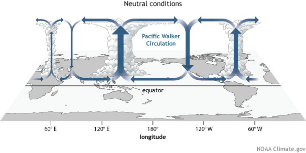 Walker Circulation - ENSO Neutral