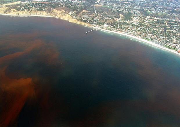 Red tide, Algae, La Jolla, California