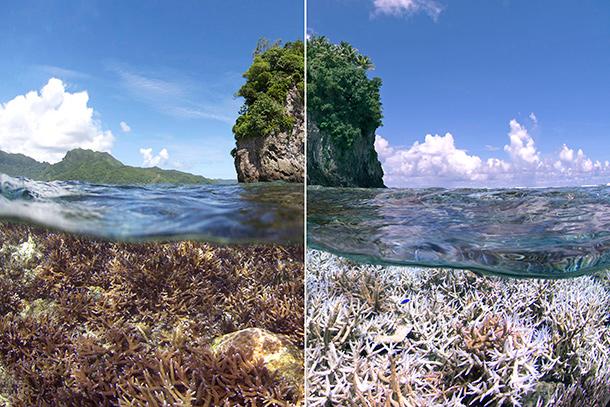 Photo of coral bleaching in American Samoa.