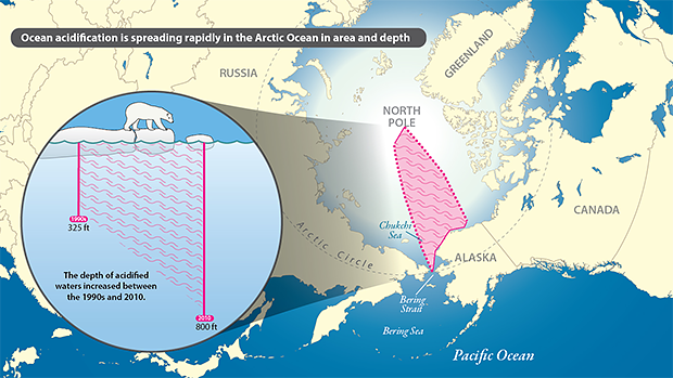 Arctic Ocean acidification infographic
