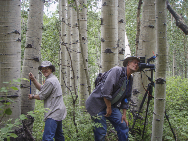a father-son team of scientists standing in woods with large aspen trunks in background
