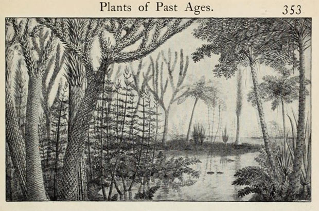 Scan of a drawing in an old book, showing an artists conception of a Carboniferous Period swamp