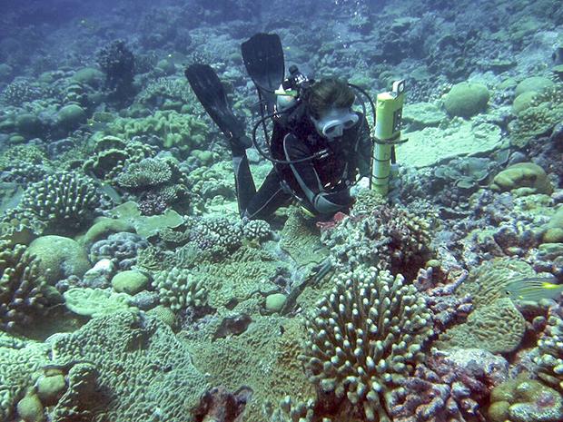 Coral, field work, Pacific Ocean, El Nino, Kiritimati, CTD