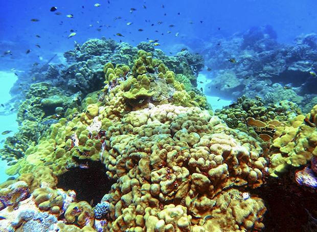 coral, Pacific Ocean, El Nino, ENSO, Kiritimati, Kiribati