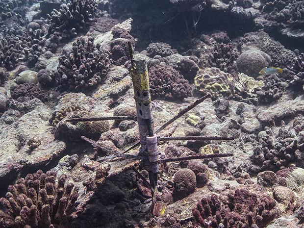 Coral, field work, Pacific Ocean, El Nino, Kiritimati, CTD, coral death, mortality, bleaching