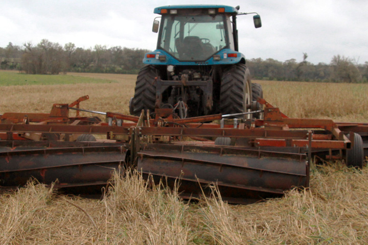 Tractor with implement for flattening crops