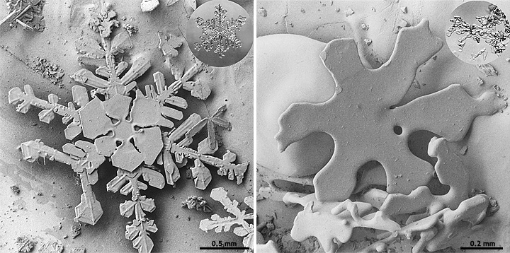 Side-by-side microscope photos of snow crystals