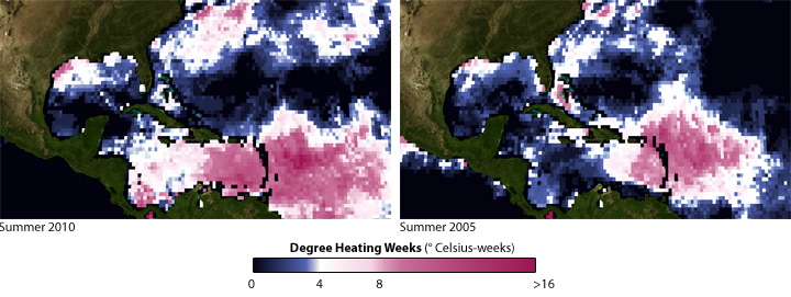 Degree heating weeks for Caribbean corals