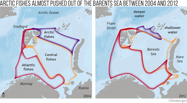 Maps show northward migration of fish communities in the Barents Sea