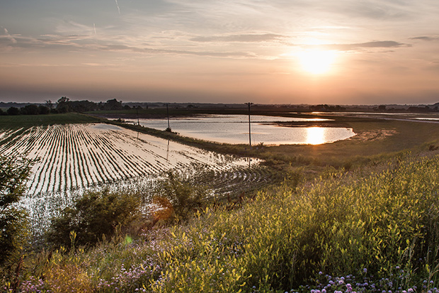 photo of a flooded cornfield with the sun shining on standing water