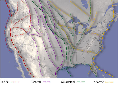 U.S. map with bird migration paths