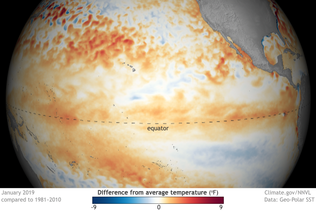 Map of tropical Pacific showing where surface temperatures were warmer or cooler than average in January 2019.