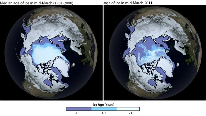 Comparison of age of sea ice in 1981-2000 and March 2011