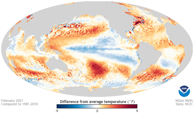 Monthly SST Anomaly: global