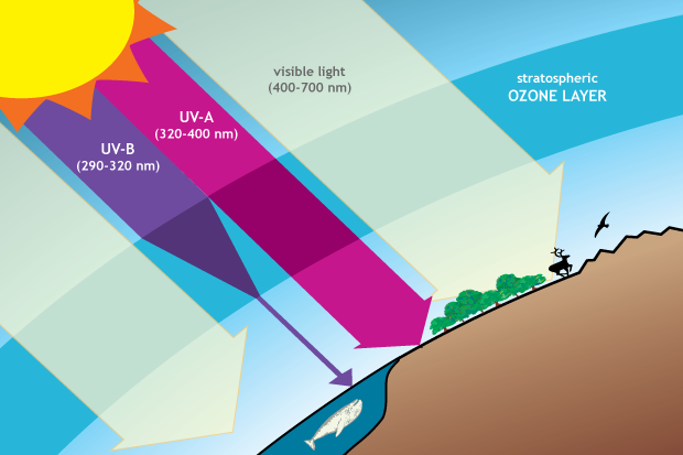 Drawing of the kinds of incoming solar radiation that reach Earth's surface