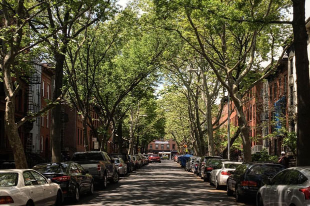 Photo of cars parked on either side of a tree-lined residential street in Brooklyn, NY