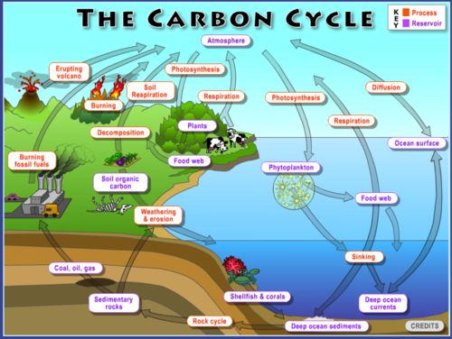 The carbon cycle interactive noaa climate notes from our reviewers ccuart Choice Image